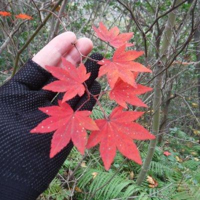ひろしま横あるき「映える秋」10月17日(日)コースリクエスト(ご相談に応じます)