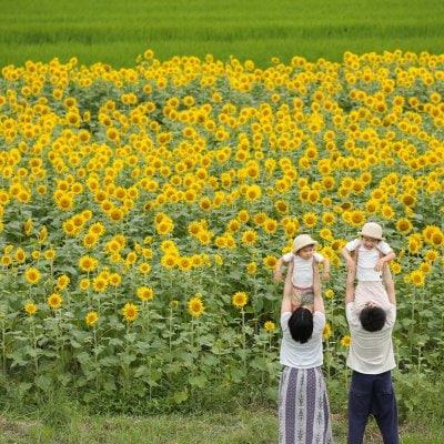 【7/18限定】ひまわり撮影会