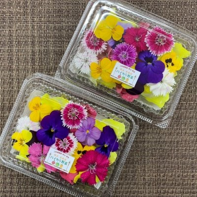 《新横浜LED菜園産エディブルフラワーミックス》(25輪×2パック) 植物...