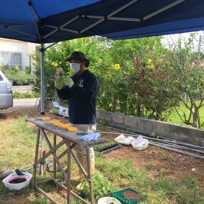 砂川農場 農業体験(オクラ収穫or 種蒔き)ウェブチケット
