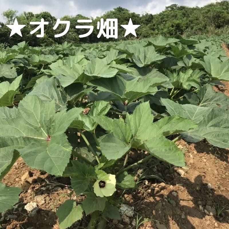 砂川農場 農業体験(オクラ収穫or 種蒔き)ウェブチケットのイメージその4