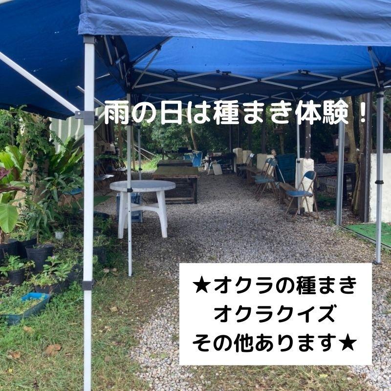 砂川農場 農業体験(オクラ収穫or 種蒔き)ウェブチケットのイメージその3