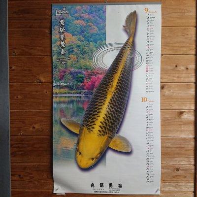 錦鯉カレンダー