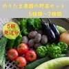 5回発送のりたまの野菜セット(有機無農薬栽培)
