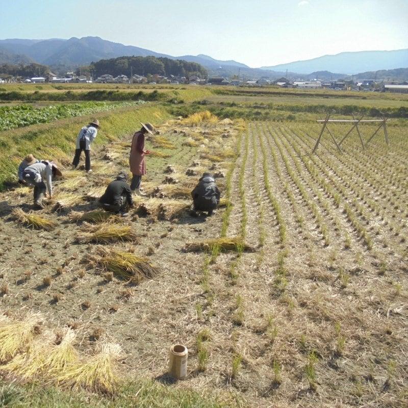 令和3年度【苗株主大募集!】自然栽培の稲作を支援する苗のオーナー「苗株主」を募集します。【百姓天下米プロジェクト〜百姓てんてこ舞いからの解放〜】のイメージその4