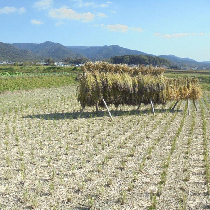 令和3年度【苗株主大募集!】自然栽培の稲作を支援する苗のオーナー「苗株主」を募集します。【百姓天下米プロジェクト〜百姓てんてこ舞いからの解放〜】のイメージその5