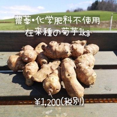 菊芋1kg/3kg/5kg【農薬・化学肥料不使用、在来種】