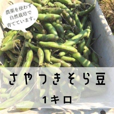 農薬不使用のさやつきそら豆1キロ【期間・数量限定】 / 自然栽培