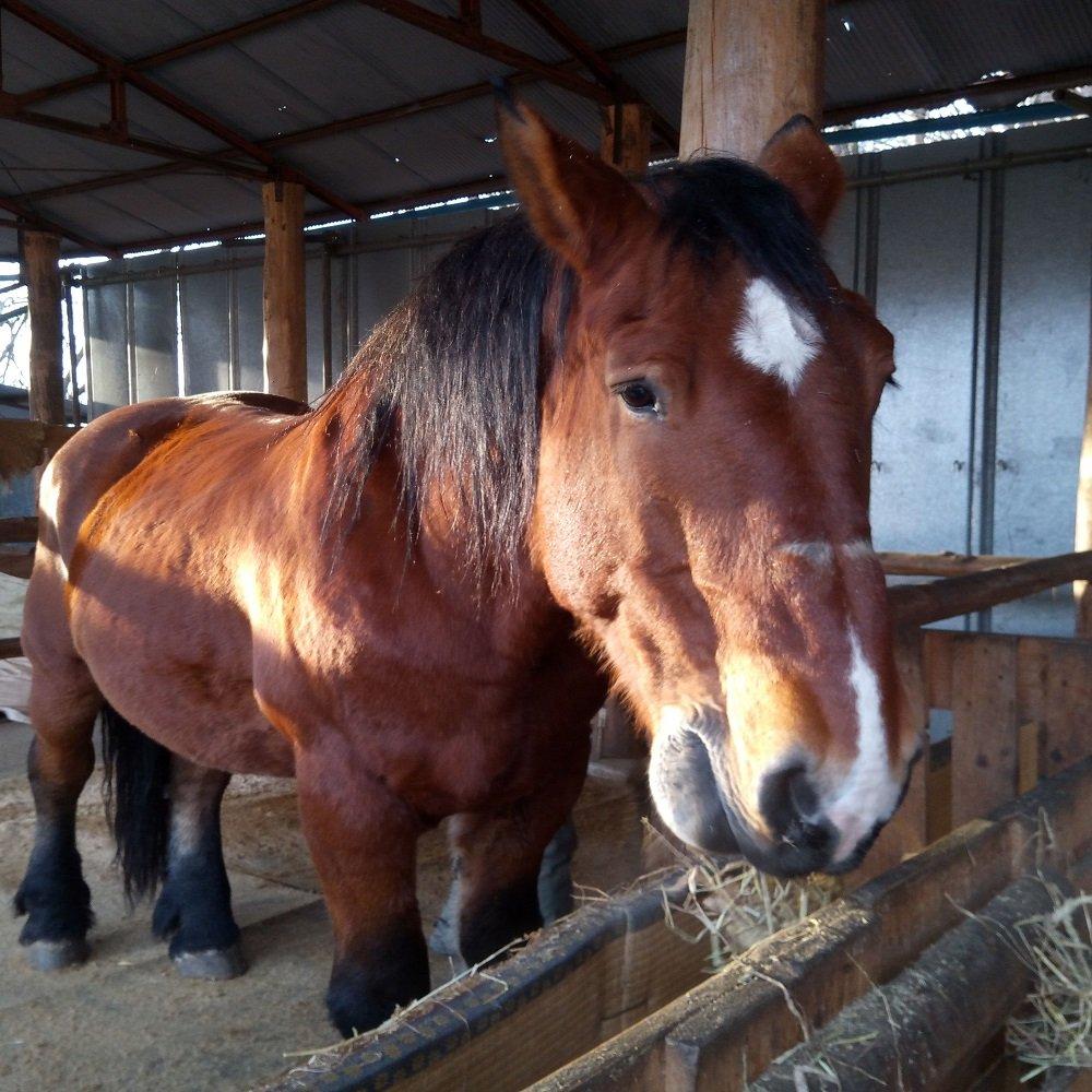 【働く馬!】ヤマトの里山応援チケットのイメージその3