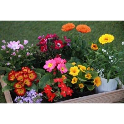 《花農家直送》[送料無料]エディブルフラワーおまかせ10ポット
