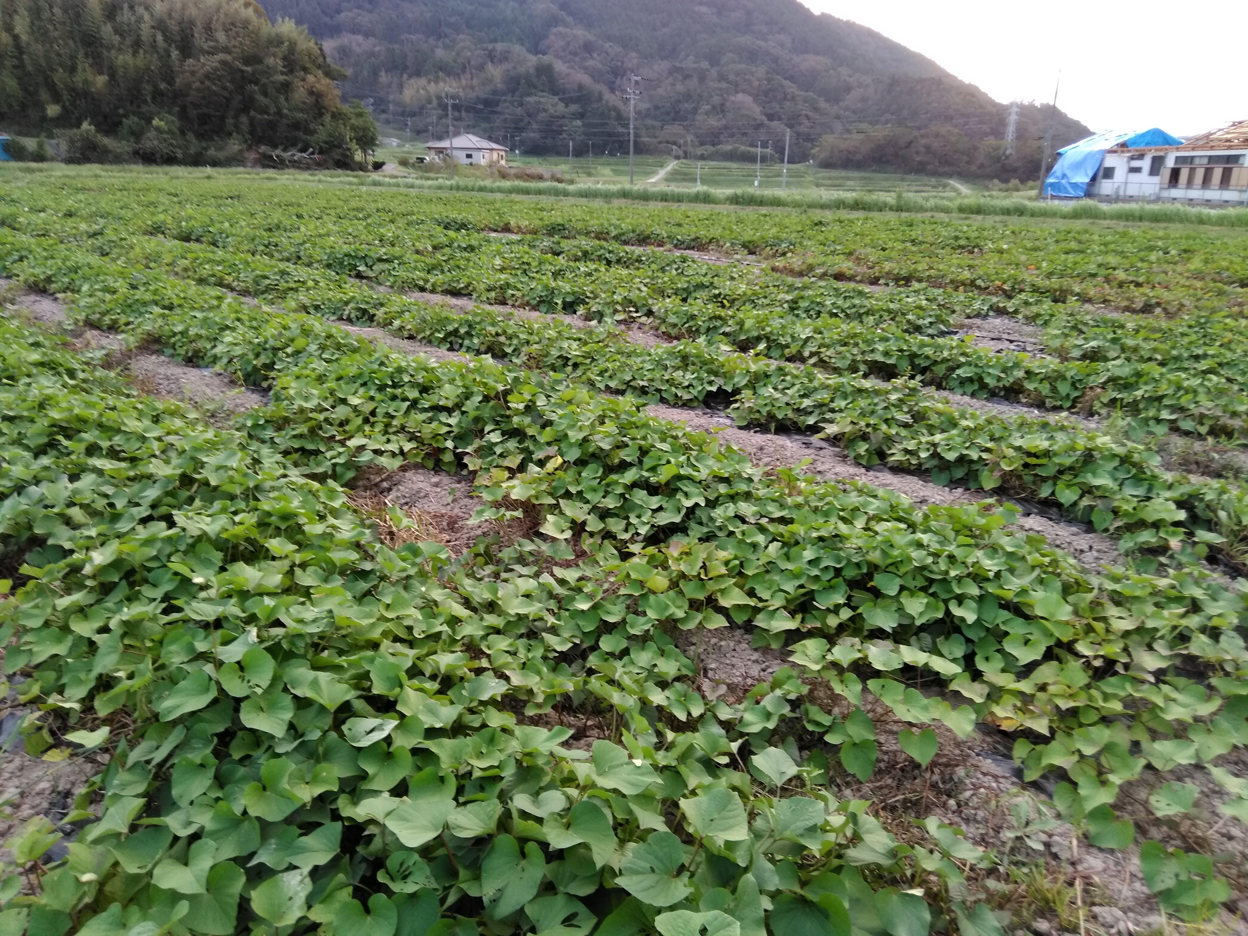zoom1.5時間 新規営農コンサルティングのイメージその1