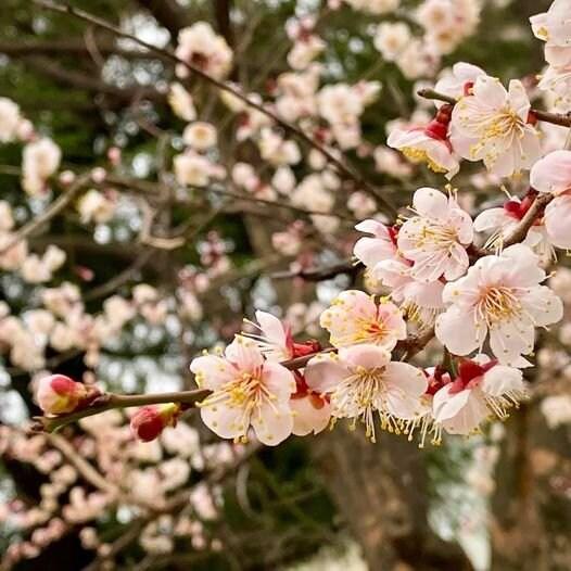 4/14(水) ちょっとのコツで見栄えが変わる【スマホ撮りが楽しくなる講座】広島のイメージその5