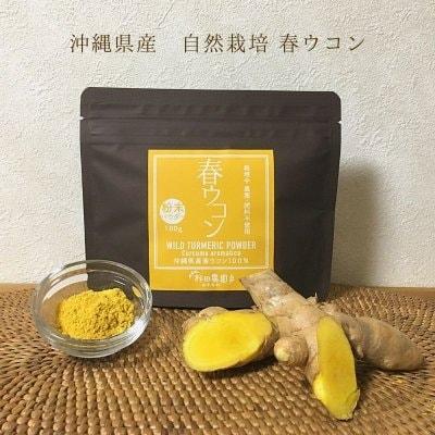《 春ウコン粉末 パウダー100g 》希少な自然栽培・沖縄県産/農薬・肥料・動物性堆肥不使用