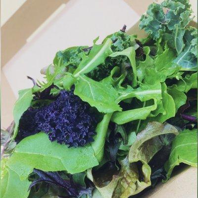 【テイクアウト専用】中西ファームこだわり野菜のシンプルグリーンサラダ
