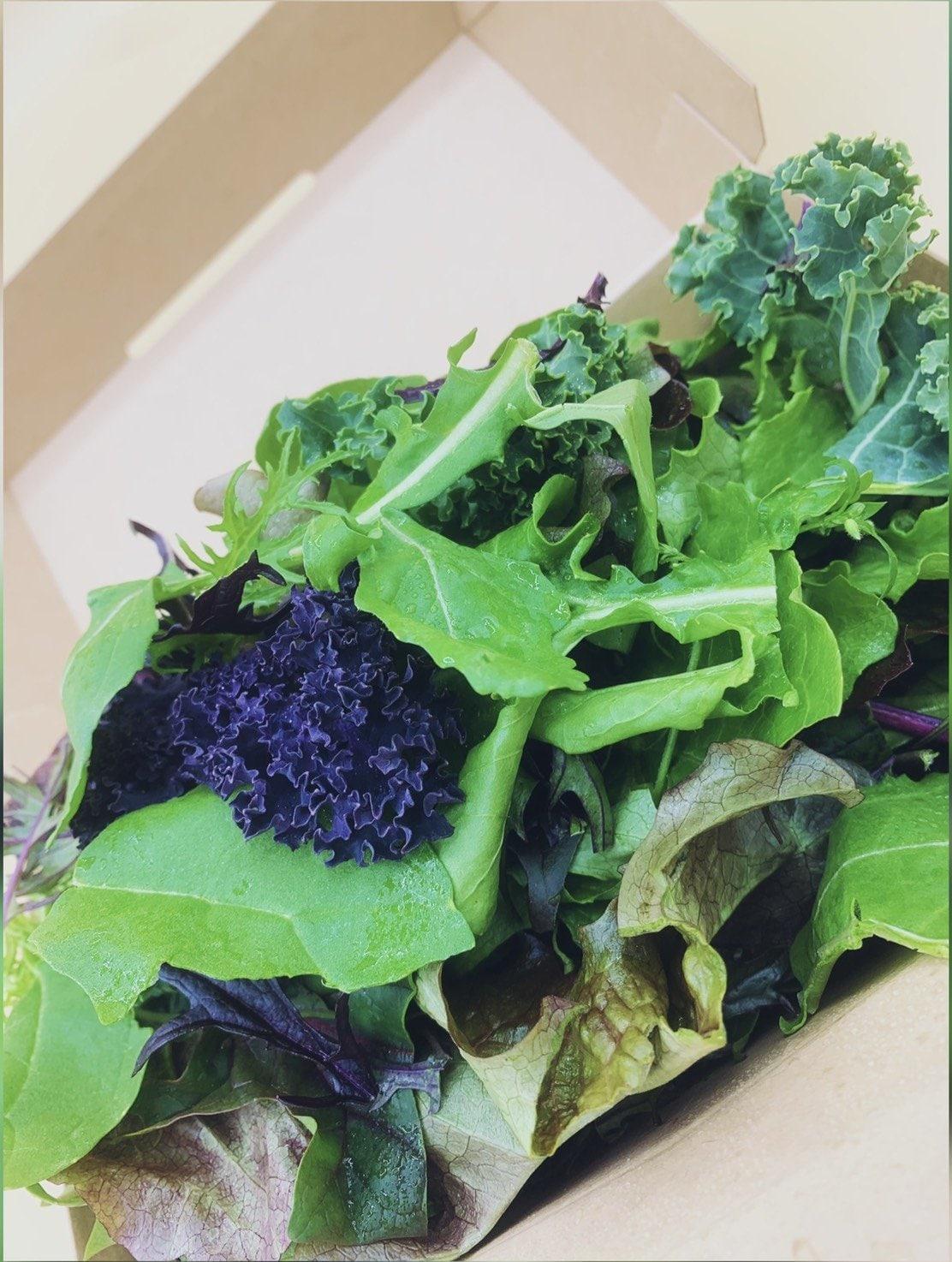 【テイクアウト専用】中西ファームこだわり野菜のシンプルグリーンサラダのイメージその1