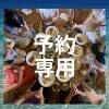 1/29 事前予約の方 専用チッケト 吉本多香美のマクロビ、分子栄養料理教室