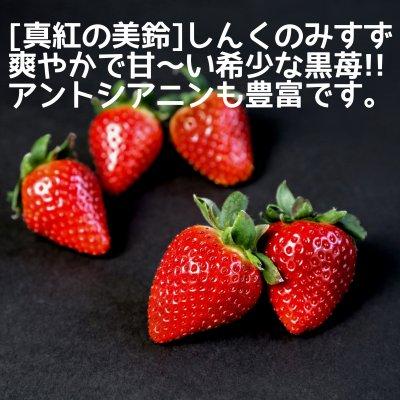 いちご[真紅の美鈴]長野県産減農薬いちご希少な黒苺1箱2パック入り(約30粒〜36粒入り)朝採り即日発送!完熟で新鮮ないちごをお届けします。