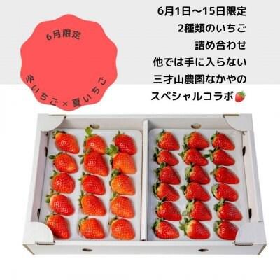 いちご[真紅の美鈴]✕[円果]詰め合わせ長野県産減農薬いちごを朝採り即日発送でお届け致します。
