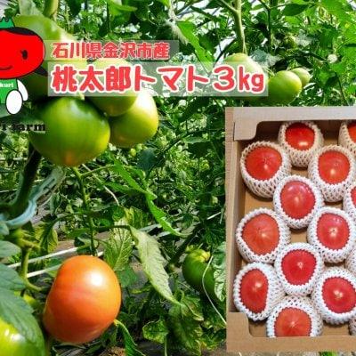 【甘くてジューシー】桃太郎トマト/石川県金沢市産