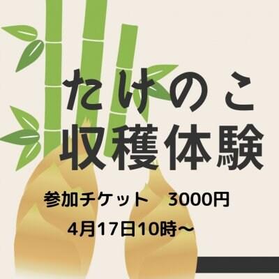 たけのこ掘り体験【ランチ&お土産付き】