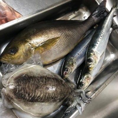 豊洲MEKIKI【 飯田水産】刺身用鮮魚セット