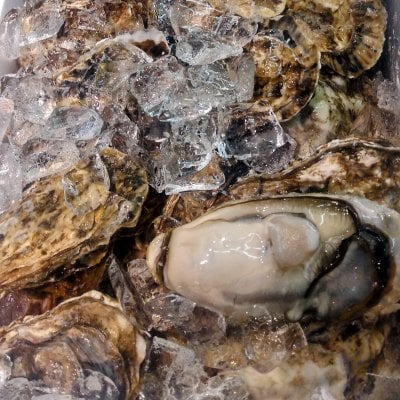 |冷蔵|北海道厚岸殻牡蠣10個セット