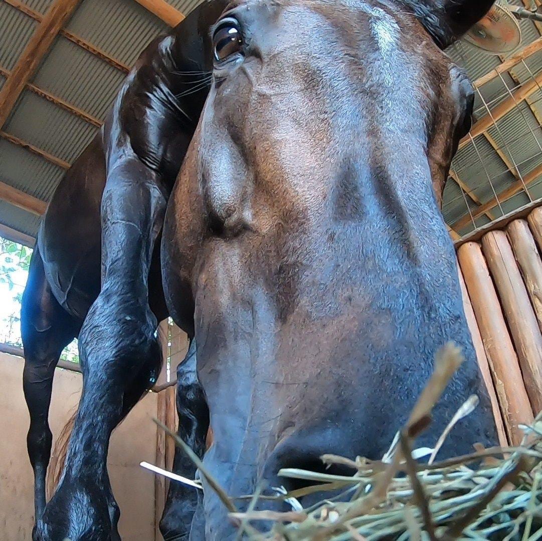 シャムロック乗馬クラブ(しゃむろっくじょうばくらぶ)✿大自然の中で馬に乗ろう!/いなさマップ「54」のイメージその1