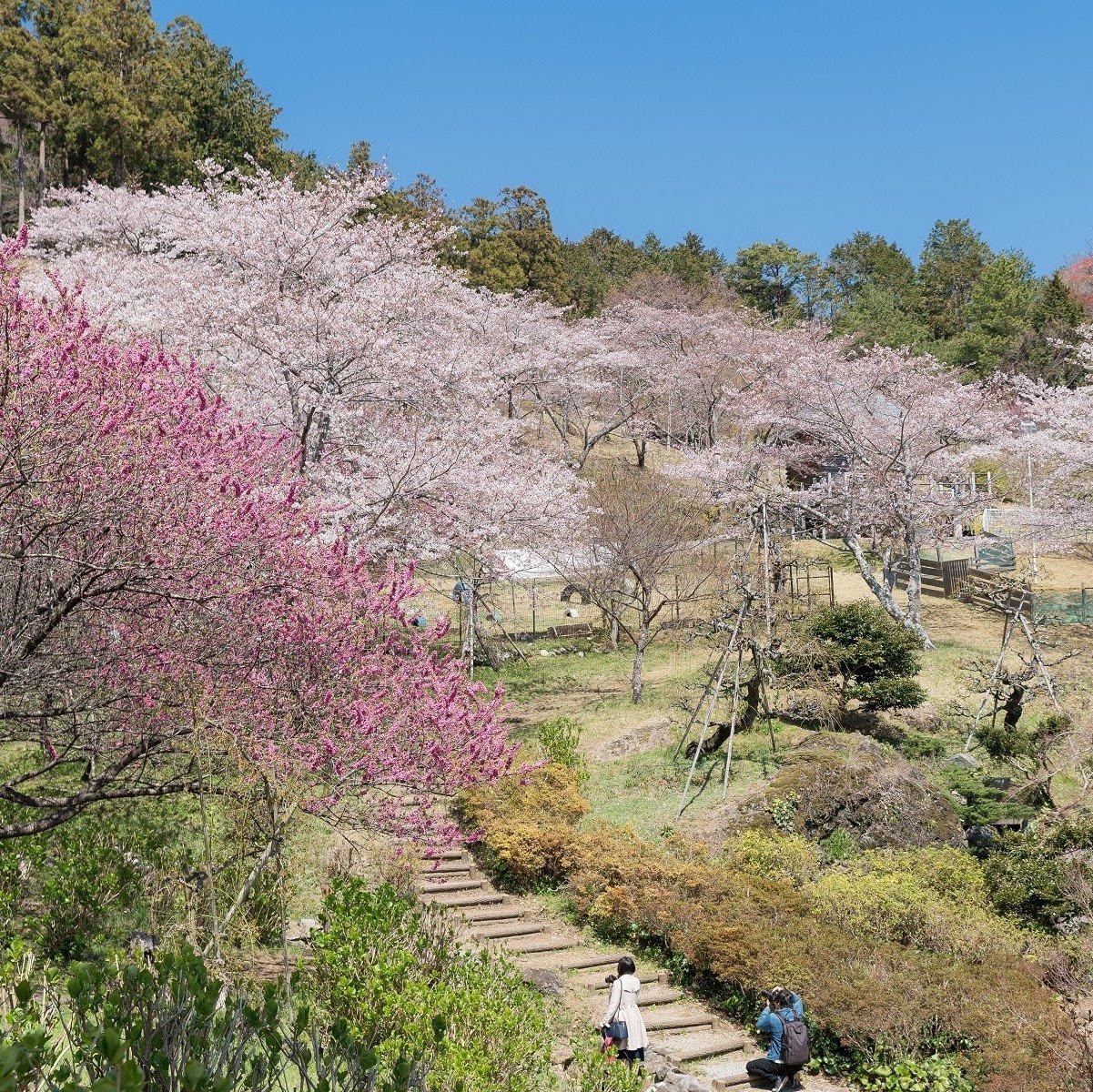 花の奥山高原(はなのおくやまこうげん)/✿のんびりゆったりお散歩♪/いなさマップ「そ」のイメージその3