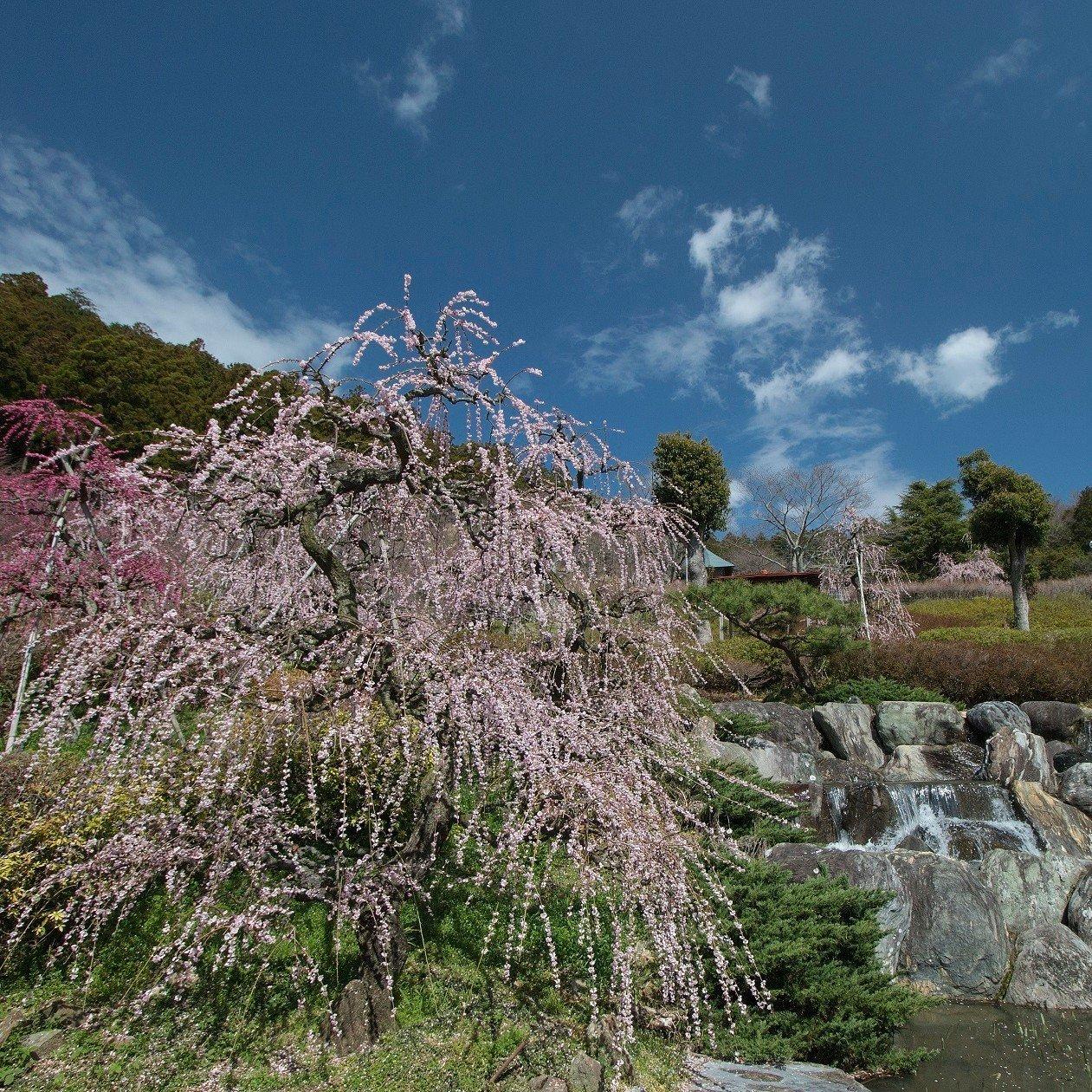 花の奥山高原(はなのおくやまこうげん)/✿のんびりゆったりお散歩♪/いなさマップ「そ」のイメージその2
