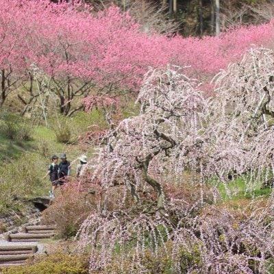 花の奥山高原(はなのおくやまこうげん)/✿のんびりゆったりお散歩♪/いなさマップ「そ」