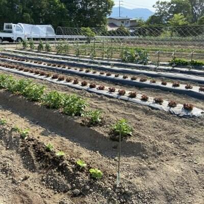 【6月】農業体験チケット