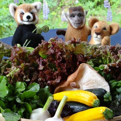 無農薬野菜のおすそ分け便 お試し便