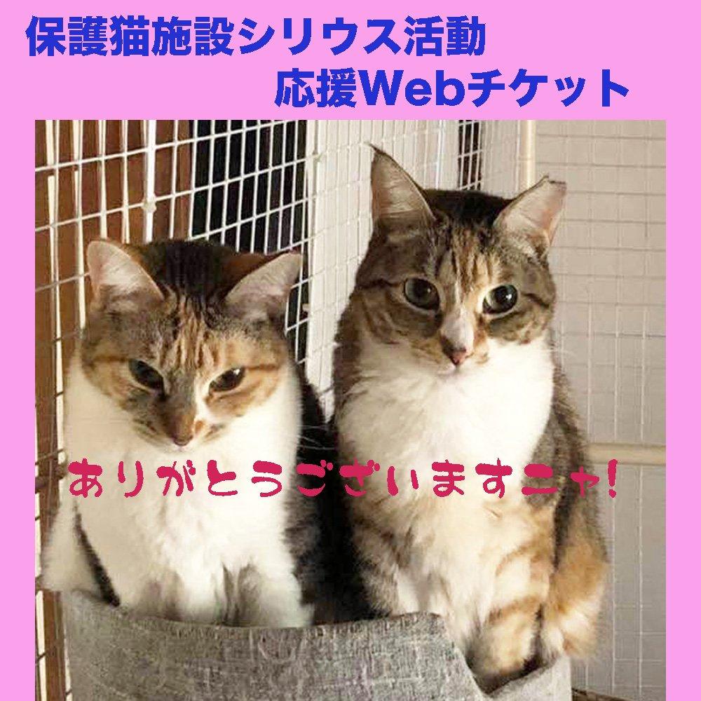 猫保護活動応援チケットのイメージその1