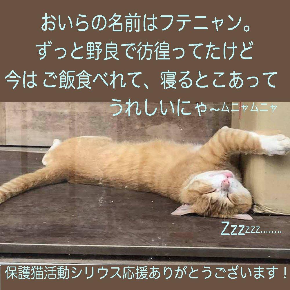 猫保護活動応援チケットのイメージその2