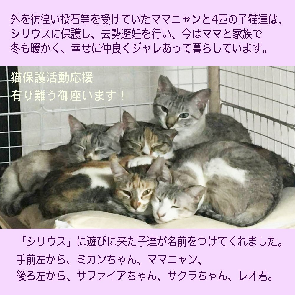 猫保護活動応援チケットのイメージその4