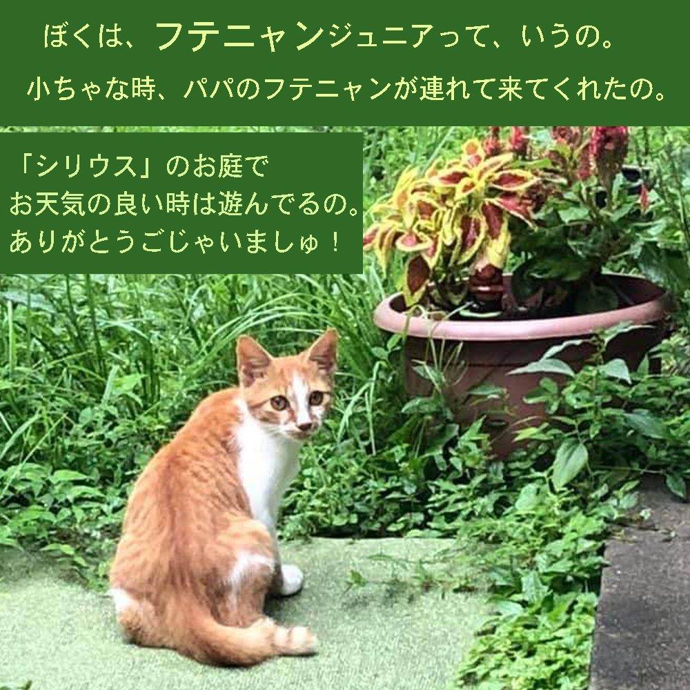 猫保護活動応援チケットのイメージその3