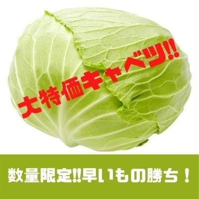 新鮮野菜【1箱】キャベツ9玉入り/大特価につき数量限定《現地にてお渡し...
