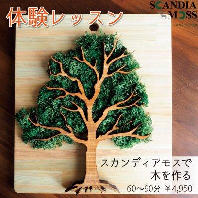 体験レッスン スカンディアモスで木を作る 60〜90分