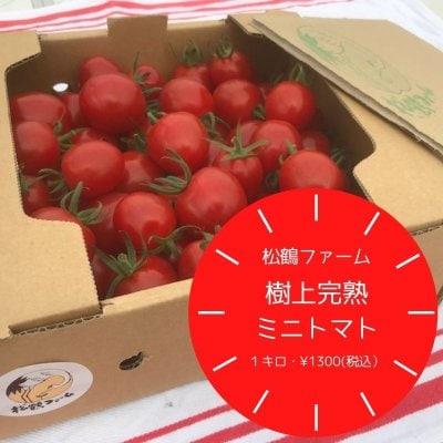 樹上完熟ミニトマト・1キロ