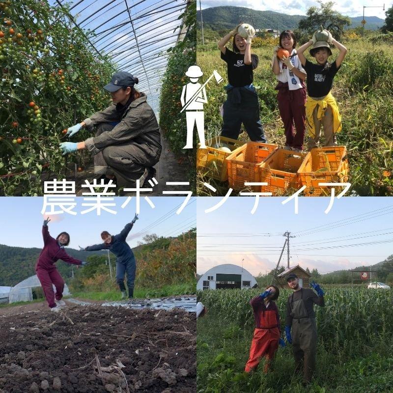 農業ボランティアin松鶴ファームのイメージその1