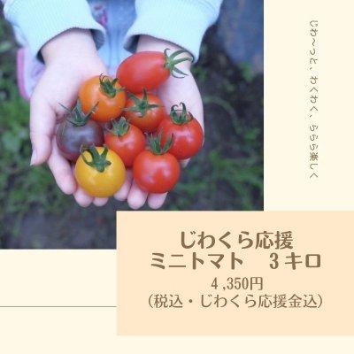 じわくら応援 ミニトマト 3キロ