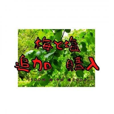 【追加分 梅1キロ】畑で梅干しワークショップ用2021/6/10