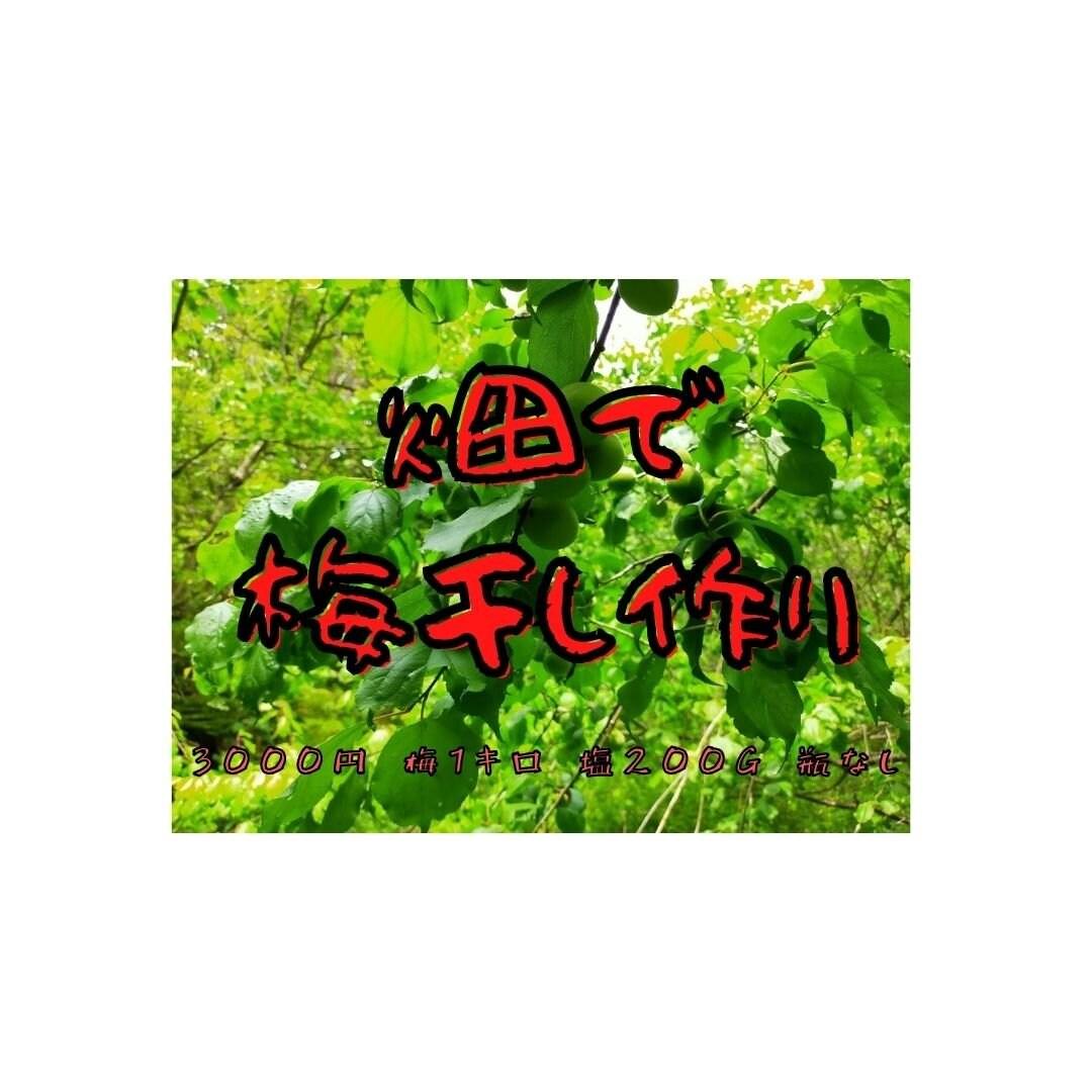 畑で梅干しワークショップ(瓶なし)2021/6/10のイメージその1