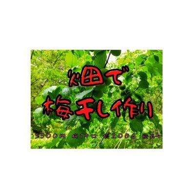 畑で梅干しワークショップ(瓶あり)2021/6/10