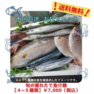 お魚じゅんちゃんの旬のお魚お任せセット;送料無料