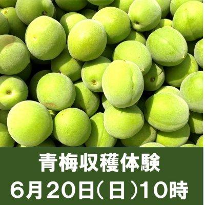 6月20日開催/完全無農薬・自然のままの青梅収穫体験!