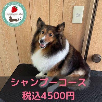 ワンちゃんのトリミング【シャンプーコース】オープン記念価格!高ポイント‼