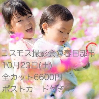 10月23日(土)春日部市コスモス撮影会