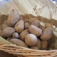 【淡路島産訳あり野菜】ジャガイモ2kg