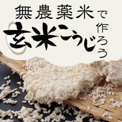 【年1回開催】根っこやの無農薬玄米で最高の玄米こうじを作ってみよう!